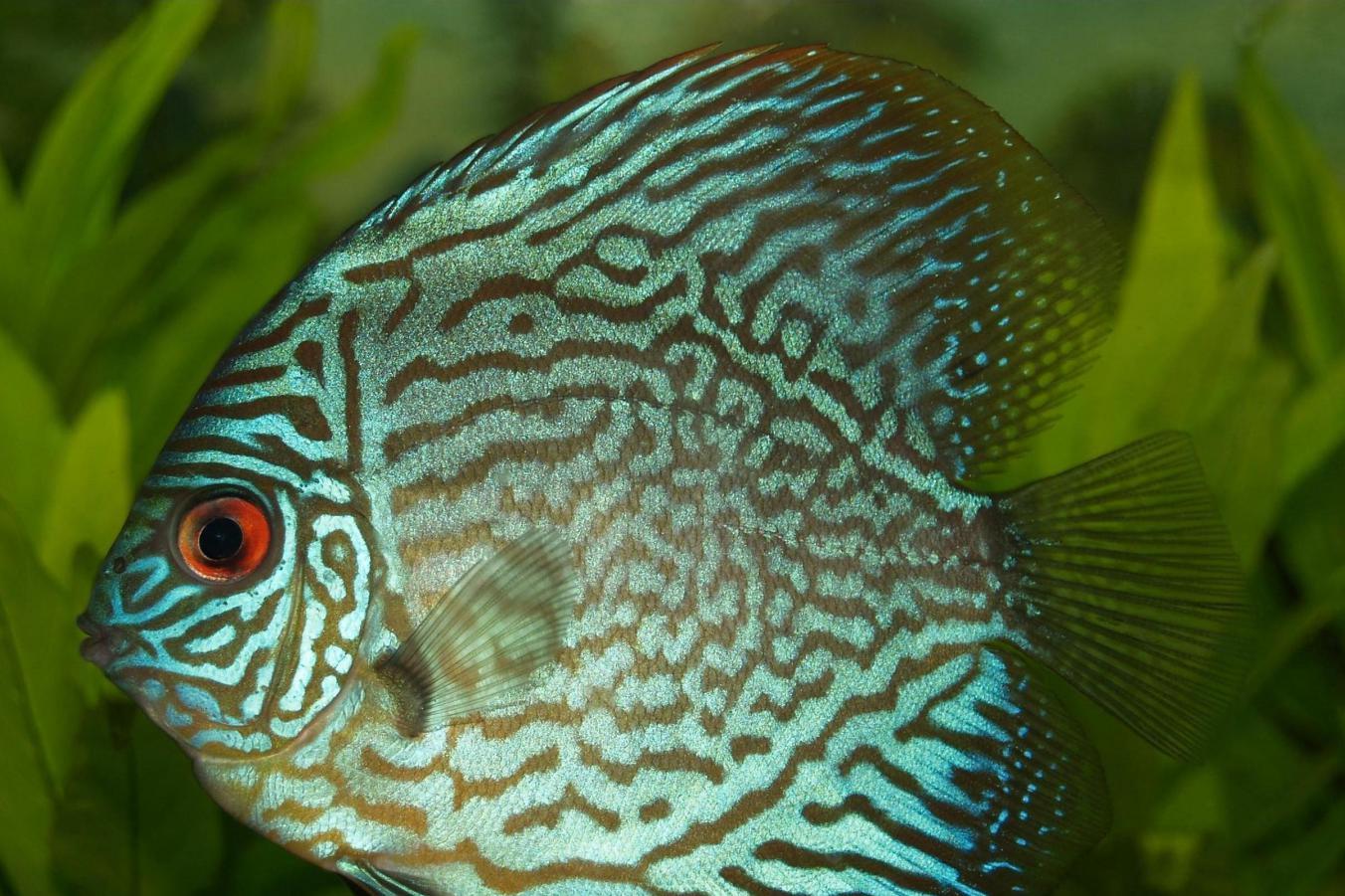b14d50692025 Překrmování akvarijních ryb je jedním z nejčastějších příčin úhynu rybek