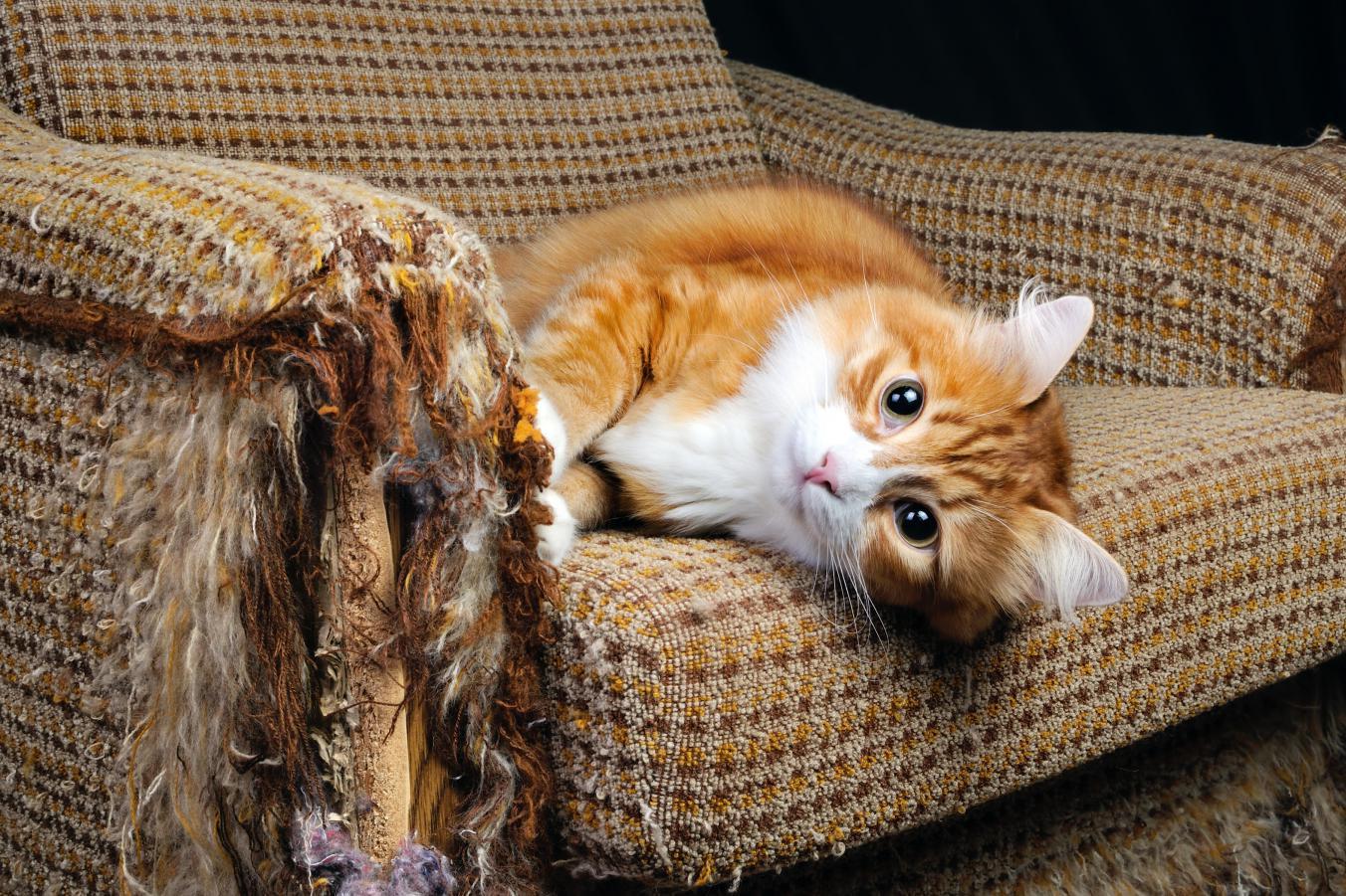 Velká volná kočička