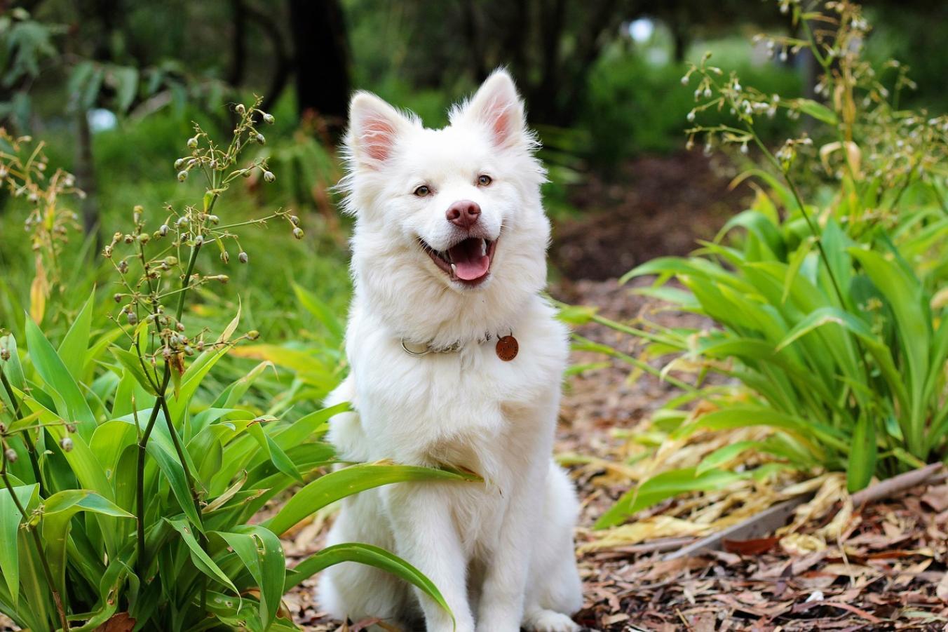 Blechy útočí nejen na psy! Kde je očekávat a jak se jich zbavit ... 13b24dfd21