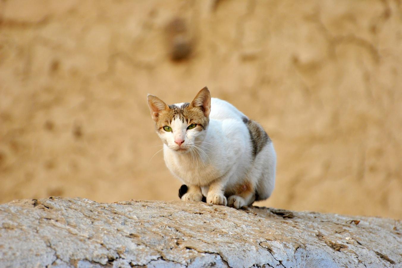 Nejpevnější kočička