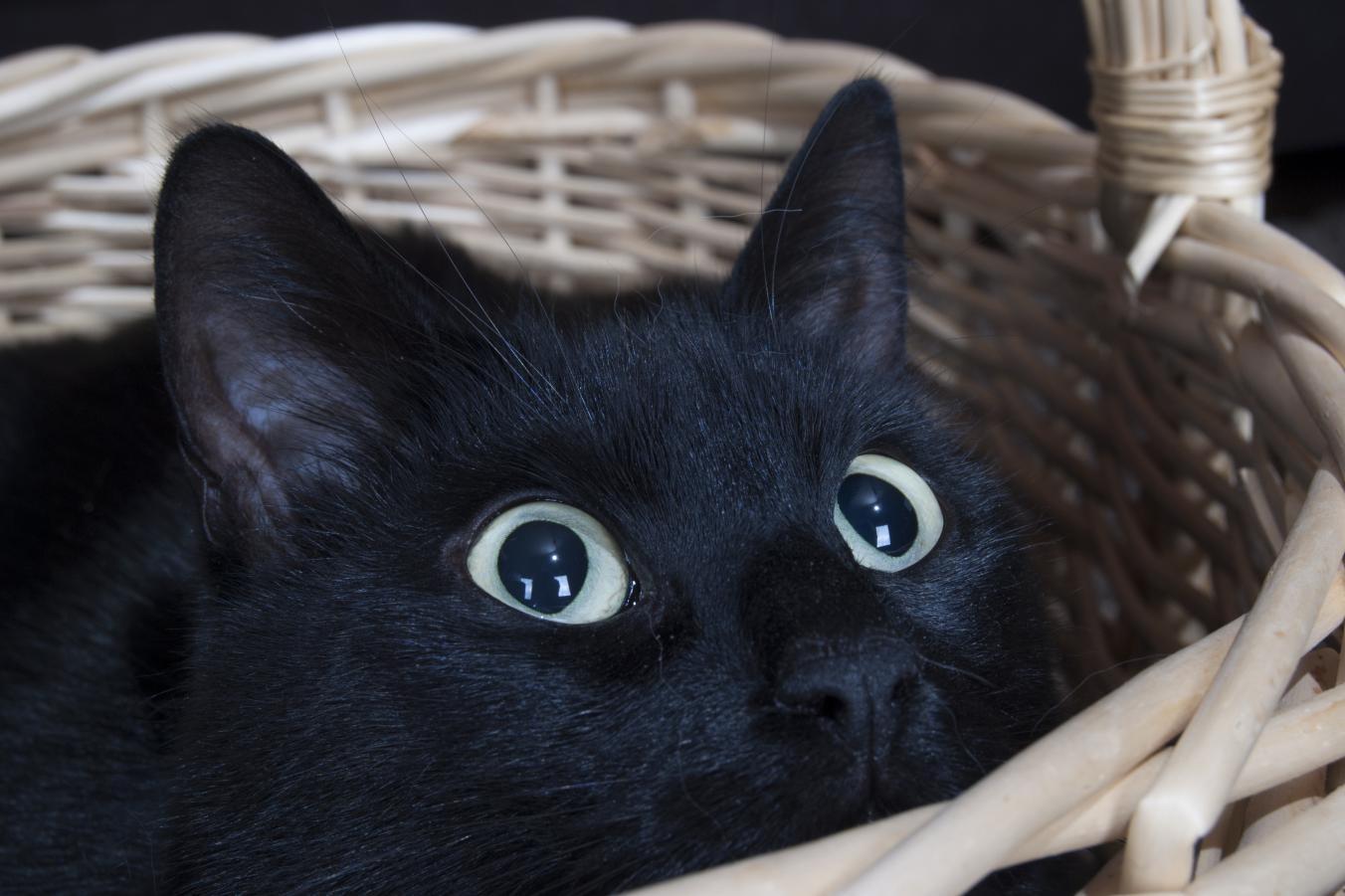 zdarma sladké kočička fotky