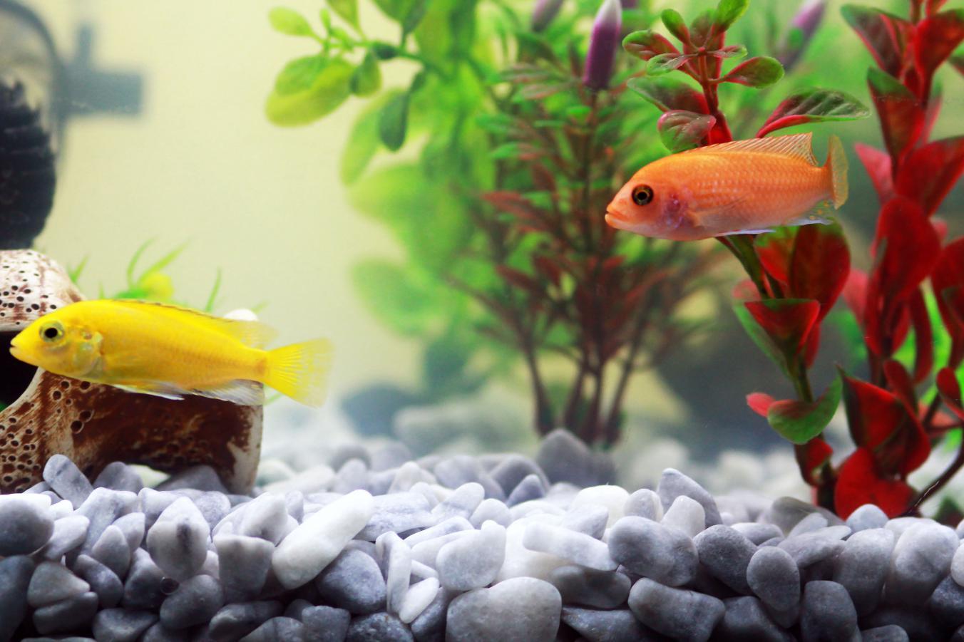e06e08c5352a Proč je překrmování akvarijních ryb problém a co způsobuje ...